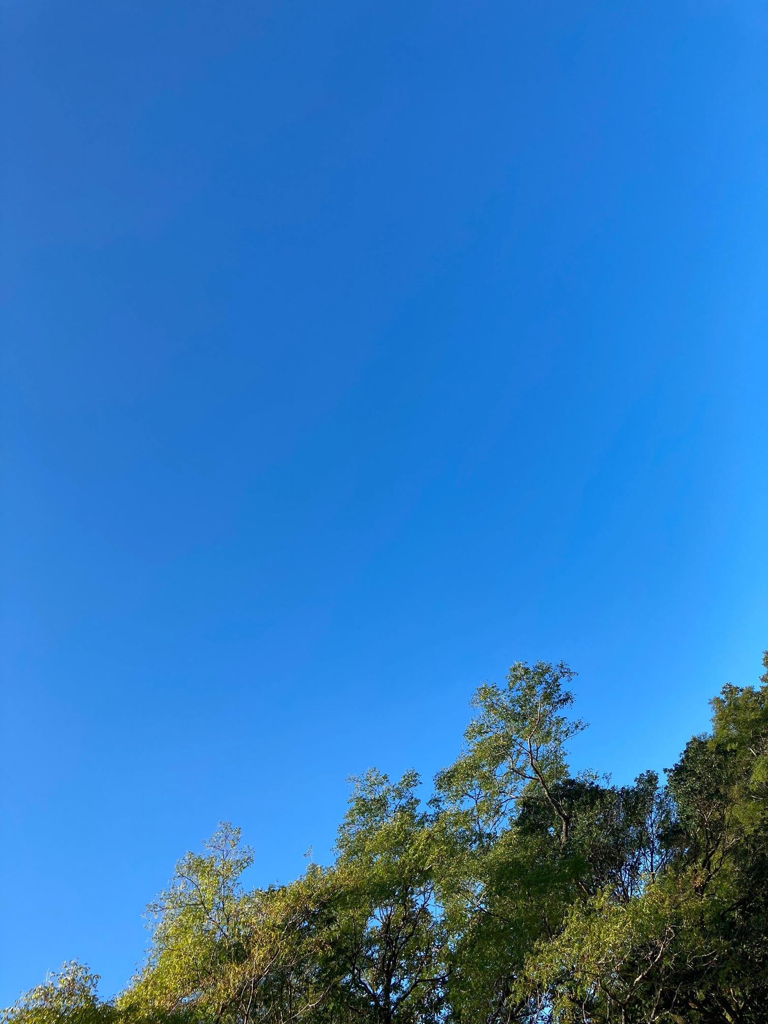 2020.11.03【光の森】散歩